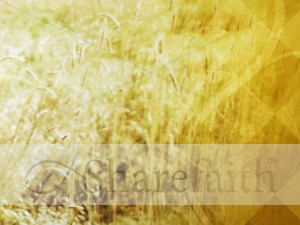 Wheat Field Worship Background