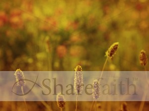 Fall Flowers Worship Backgrounds