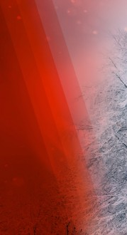 Christmas Color Website Banner