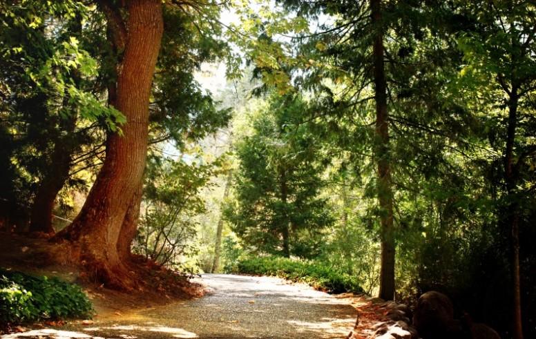 Forest Path Faith Stock Photos