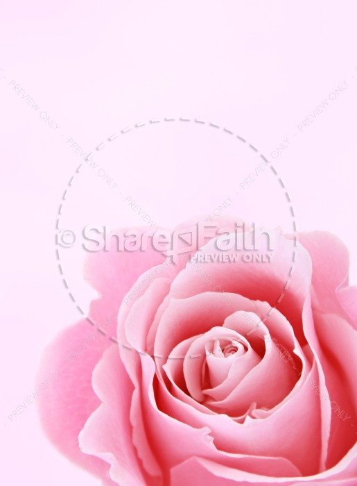 Rose Flower Christian Stock Images