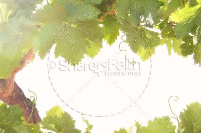 Grapevines Christian Stock Images