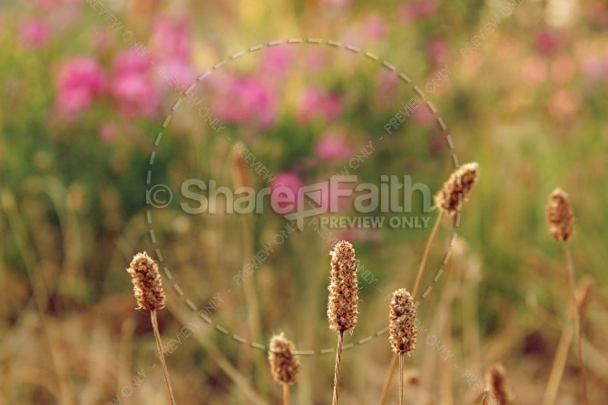 Field of Grass Christian Stock Images