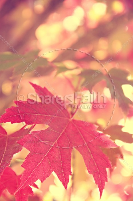 Autumn Leaf Christian Stock Photos