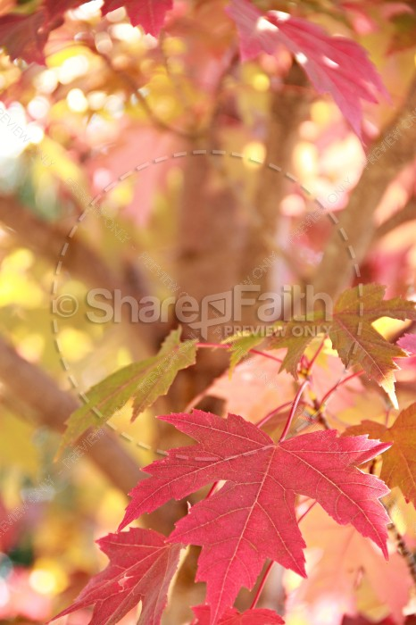 Fall Leaves Faith Stock Photos