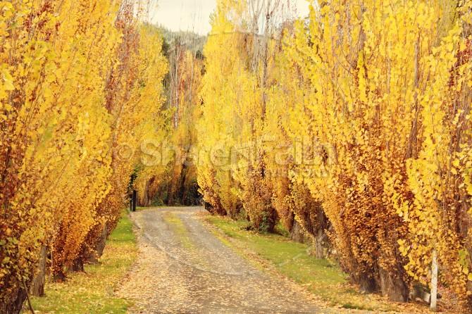 Forest Path Christian Stock Photos
