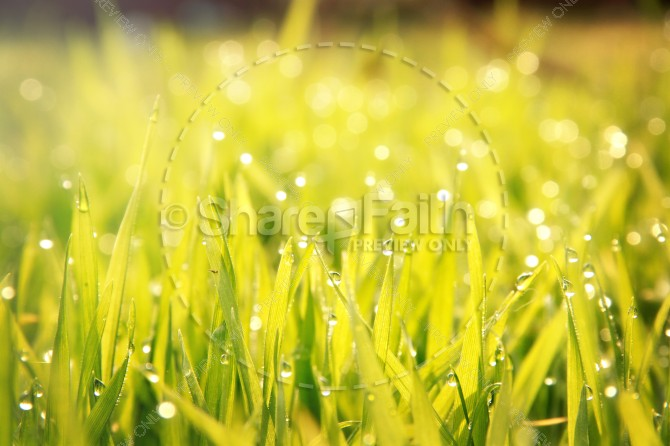 Green Grass Christian Stock Photo