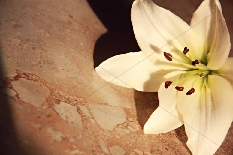 White Flower Christian Stock Image