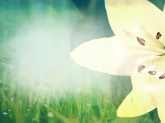 Pure Easter Lilly Worship Background