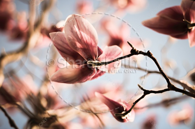 Blossom Religious Stock Photo