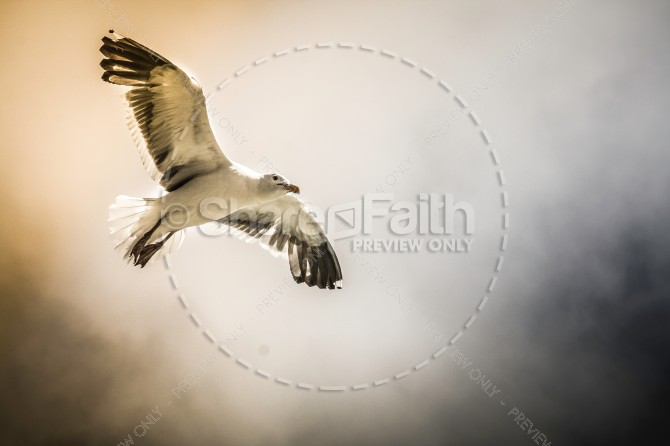 Seagull Christian Stock Photo