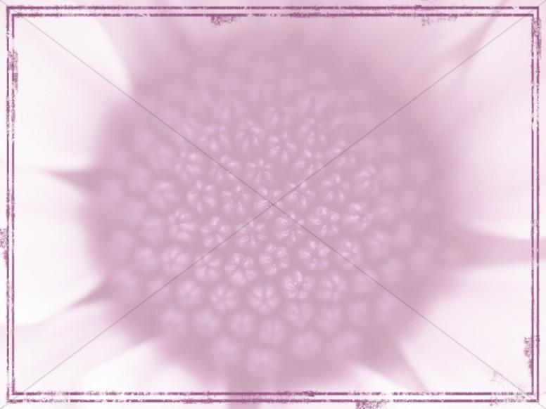 Purple Flower Worship Background