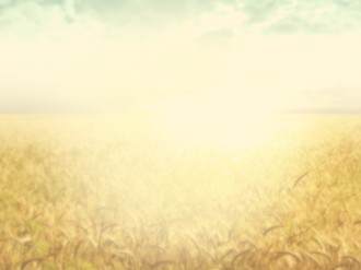 Field of Grain Worship Background