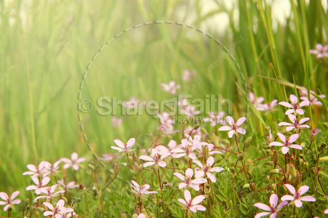 Spring flowers Christian Stock Photo