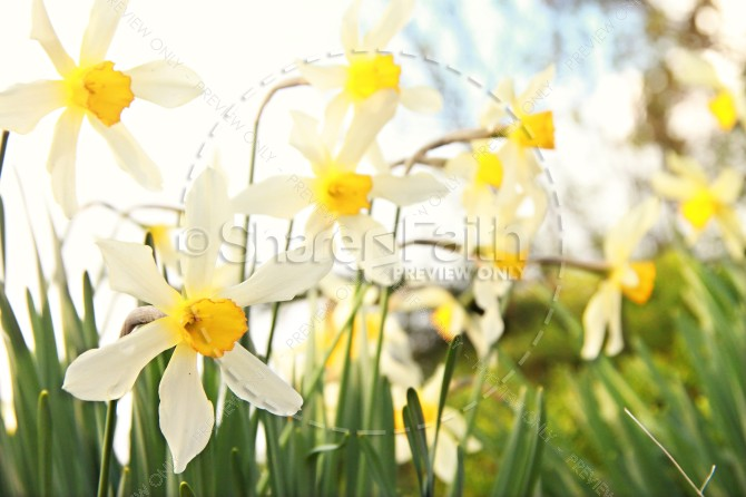 Flower in the Field Christian Stock Photo