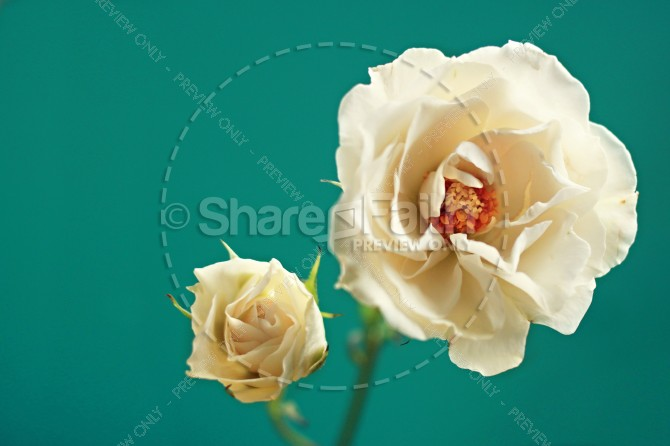White Flower Religious Stock Image