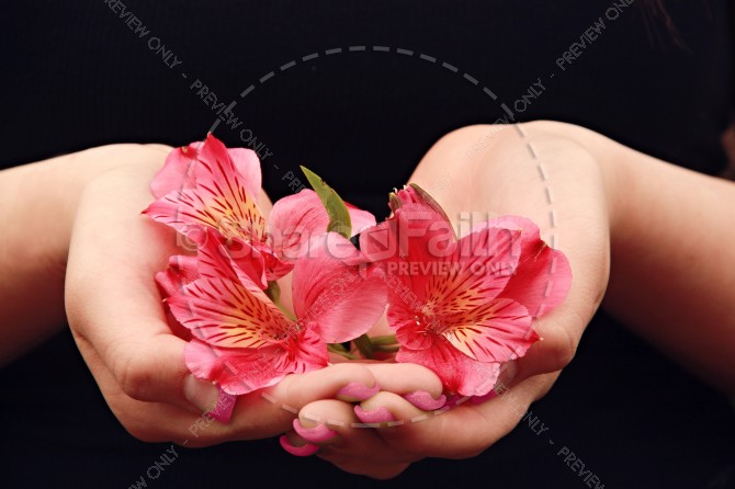 Flower Petals Religious Stock Photo