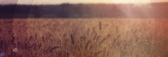 Field of Wheat Website Banner