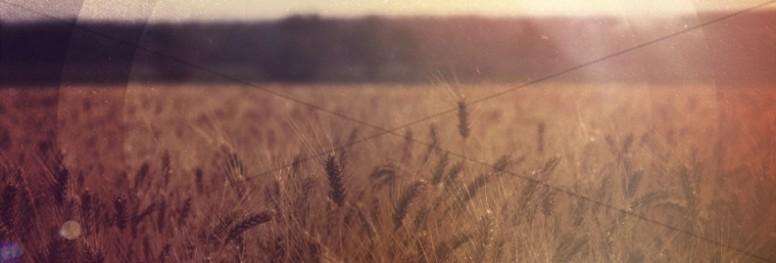 Field of Wheat Website Banner