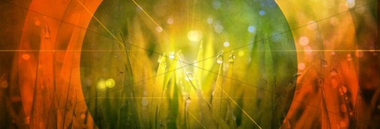 Growing Grass Web Banner