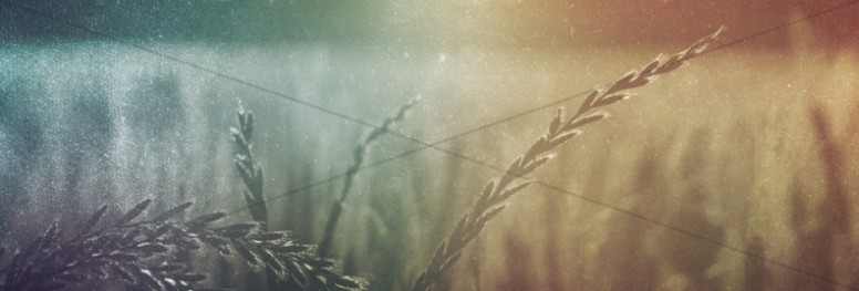 Wheat Field Harvest Fall Autumn Website Banner Graphicas