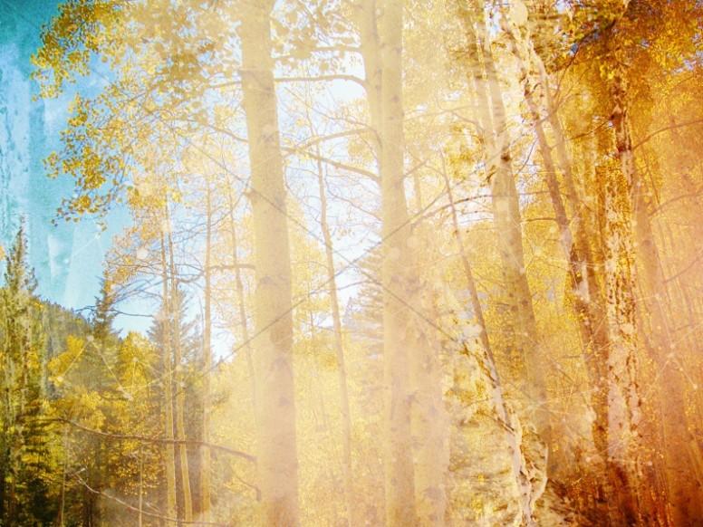 Sunlit Forest Scene Chruch Background