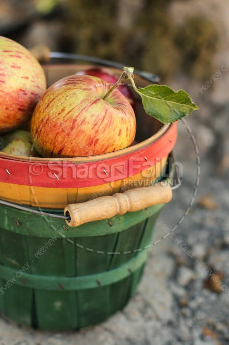 Bucket of Apples Church Stock Photo
