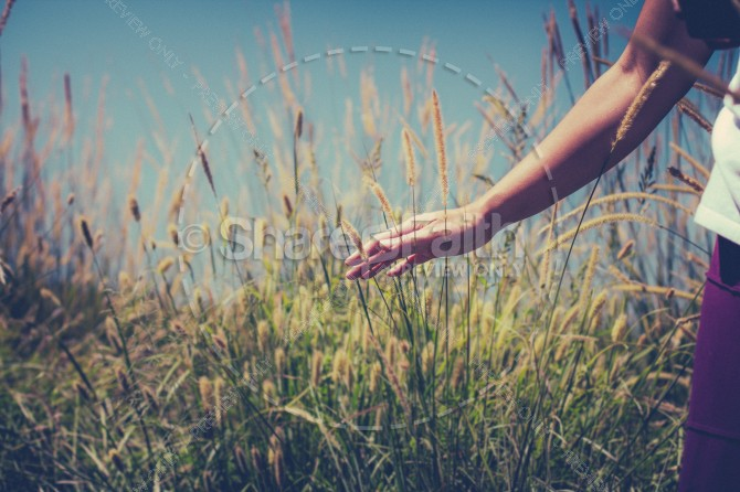 Person in Wheat Field Religious Stock Photograph