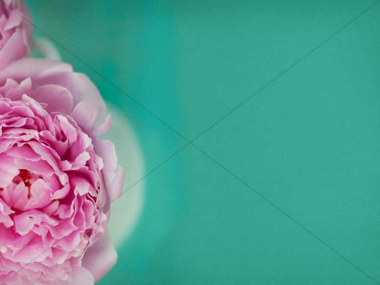 Blooming Rose Religious Stock Photo