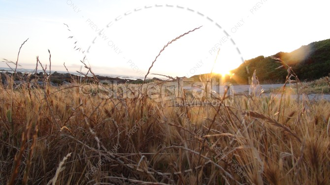Setting Sun and Shoreline of Dry Brush Ministry Stock Photo