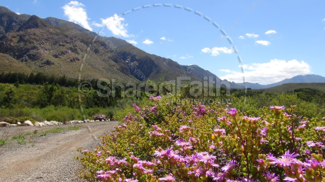 Trail of Blossoms and Mountain Landscape Ministry Stock Photo