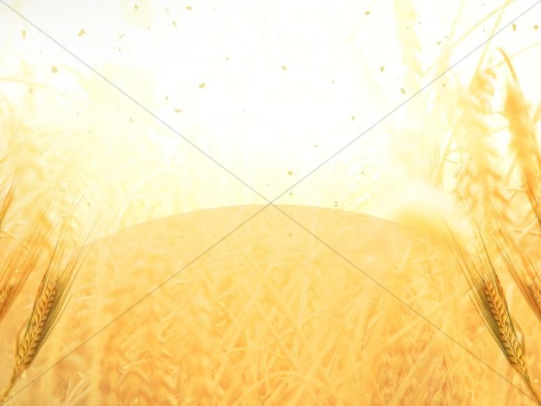 Golden Grains Harvest Worship Still
