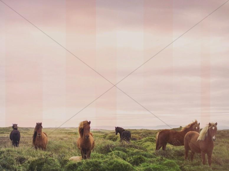 Horses Grazing Religious Worship Background