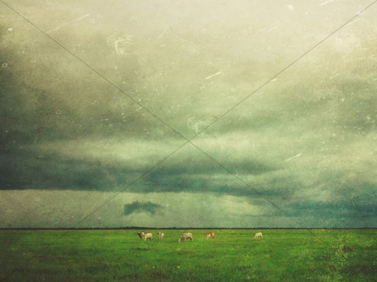 Grazing Sheep Worship Background