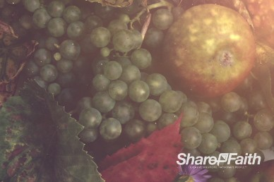 Happy Thanksgiving Fruit Bounty Worship Video Background
