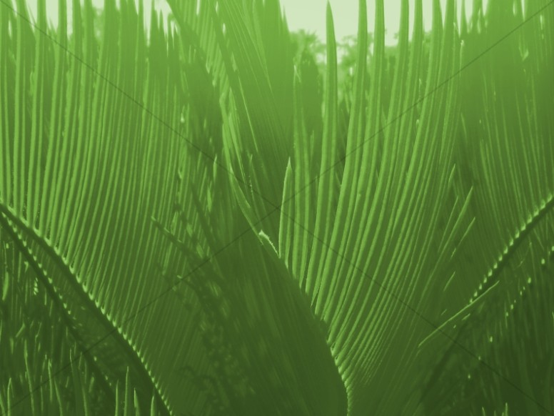 Palm Sunday Hosanna to the King Church Worship Background