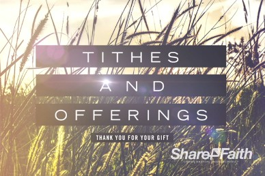 Kingdom of Heaven Wheat Tithes and Offerings Video Loop