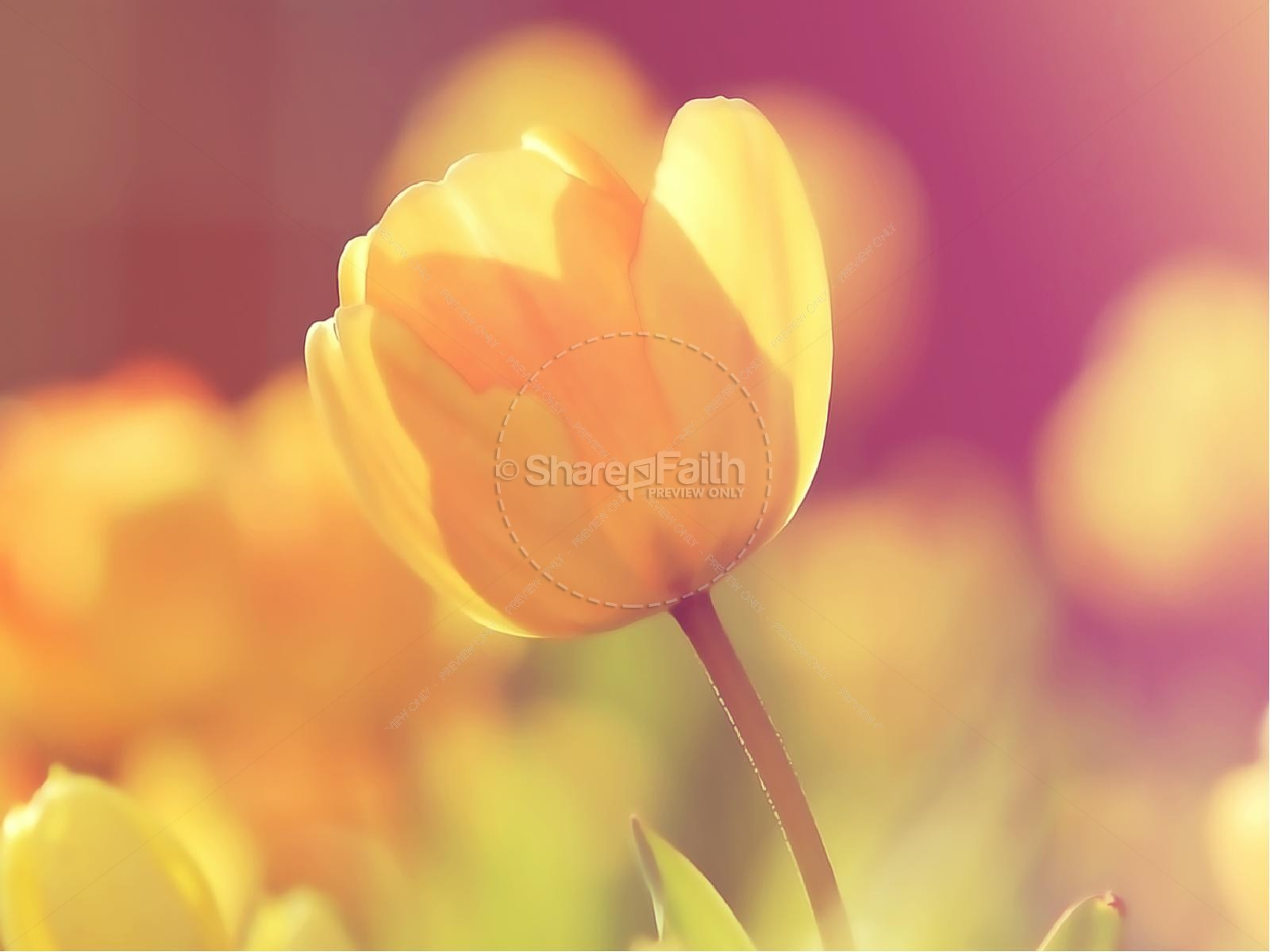 Yellow Tulip Mother's Day Church PowerPoint