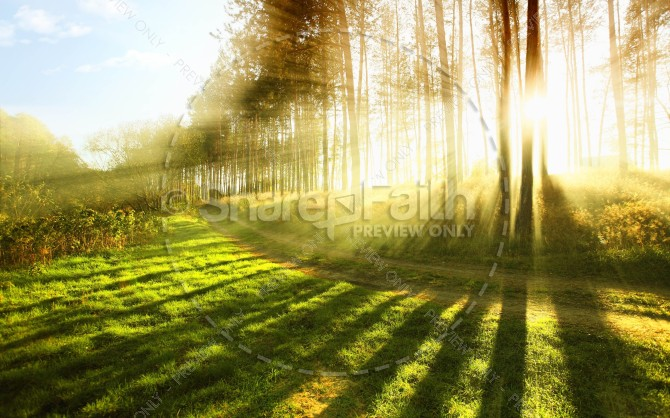 Sun Shining Through The Trees Religious Stock Photo