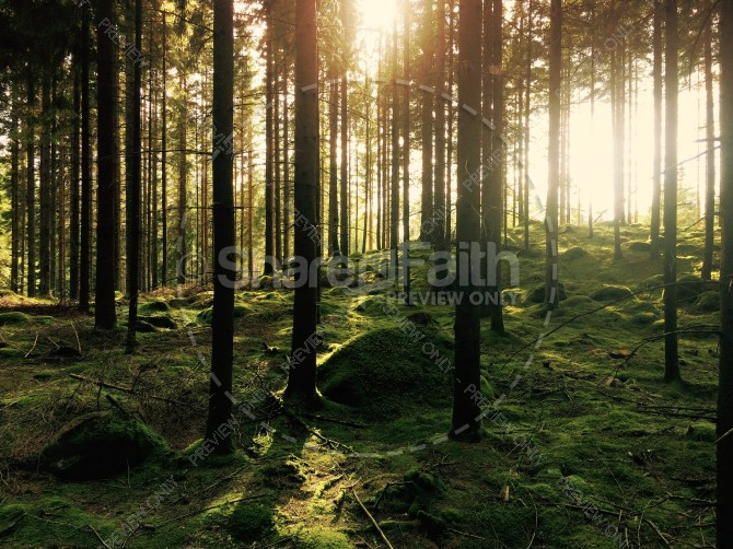 Twilight in the Forest Ministry Stock Photo