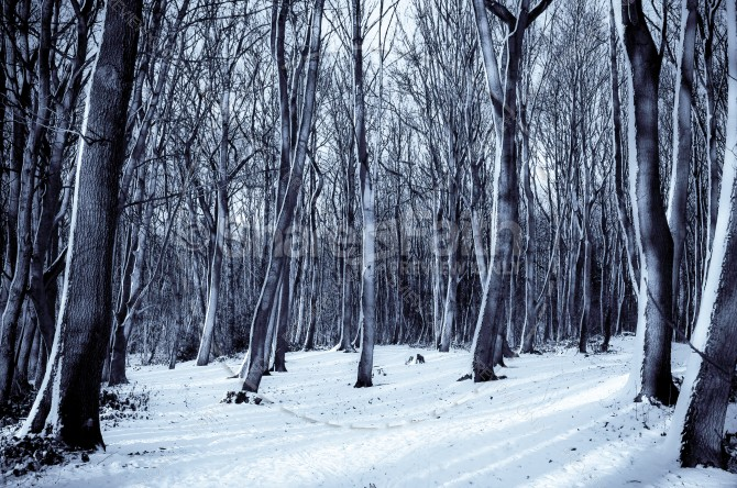 Winter Forest Trees Ministry Stock Photo