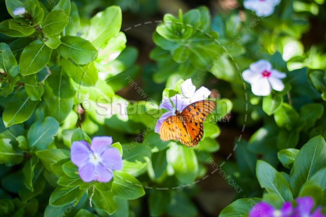 Butterfly Garden Ministry Stock Photo