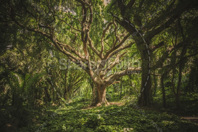 Ancient Tree of the Forest Ministry Stock Photo