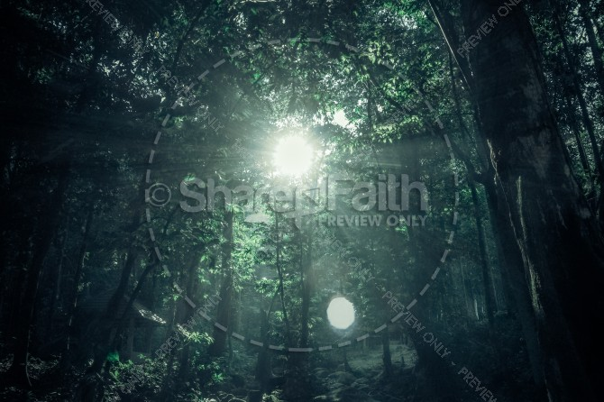 Sunlight Through the Tree Tops Ministry Stock Photo