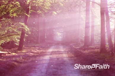 Road in the Forest Church Worship Video Background Loop