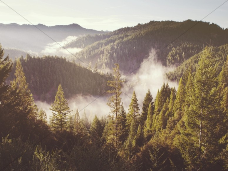 Forest Myst Through the Mountains Worship Background