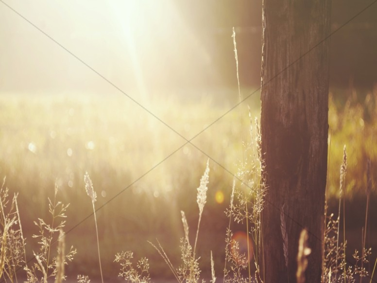 Wooden Post in the Field Worship Background