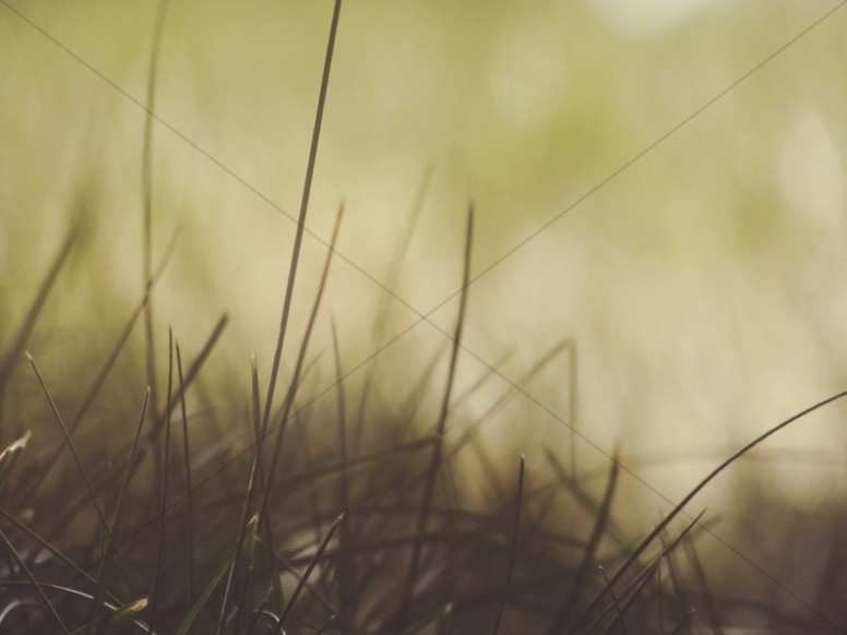 Gentle Blades of Grass Worship Background
