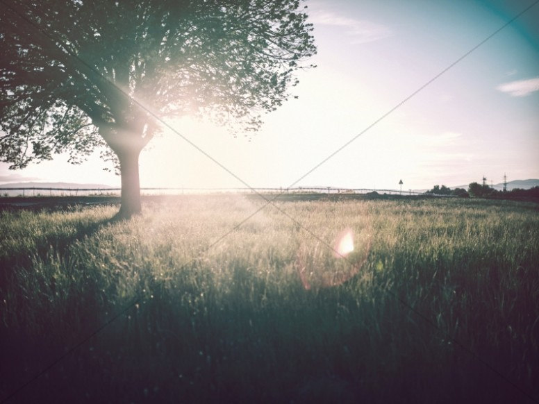 Tree Standing in a Field Worship Background