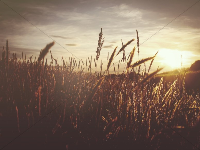 Sunset Over the Wheat Field Church Worship Background